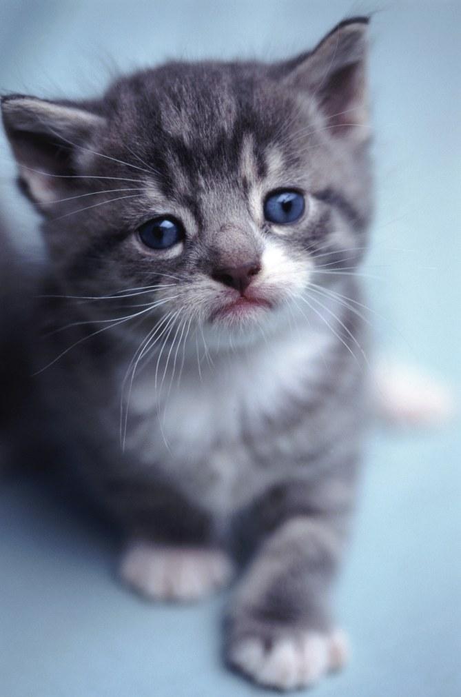 Un chaton trop mimi
