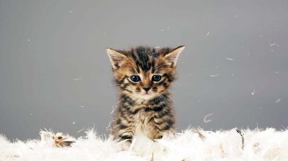 5 preuves que les chats sont bons pour vous (en plus d'être mignons)