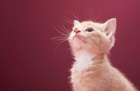 Les bienfaits du chat