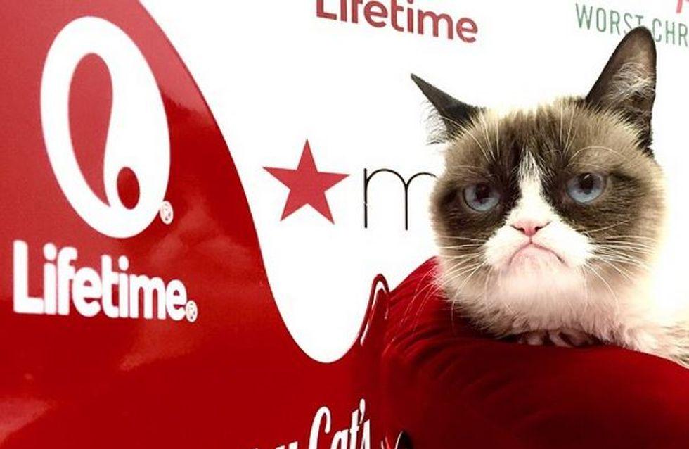 Grumpy Cat, un chat plus riche que certaines stars