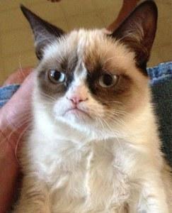 Voici la première photo du Grumpy Cat.
