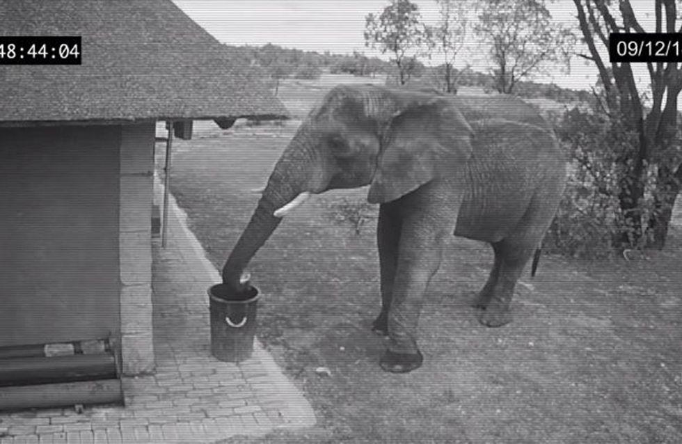 Was dieser Elefant gleich macht, hätte niemand erwartet