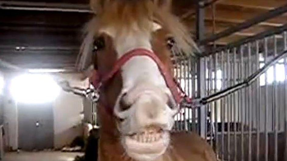 Hund, Katze, Pferd: Dieses Weihnachtslied ist wirklich TIERISCH :)