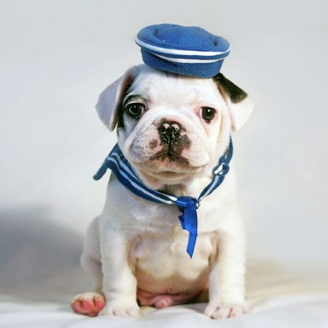 Cachorro-marinheiro