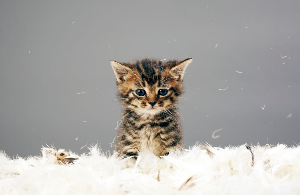Payez vos impôts si vous ne voulez pas qu'on vous enlève votre chat ….