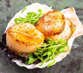 Capesante: la ricetta per cucinarle alla perfezione, come insegna Gordon Ramsey