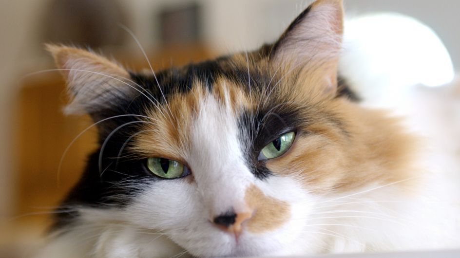 Un chat errant sauve la vie d'un nouveau-né abandonné en Russie