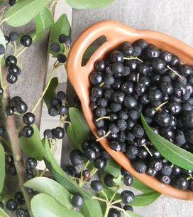 Bacche di Maqui: scopri le proprietà e i benefici di questo frutto tipico del Su