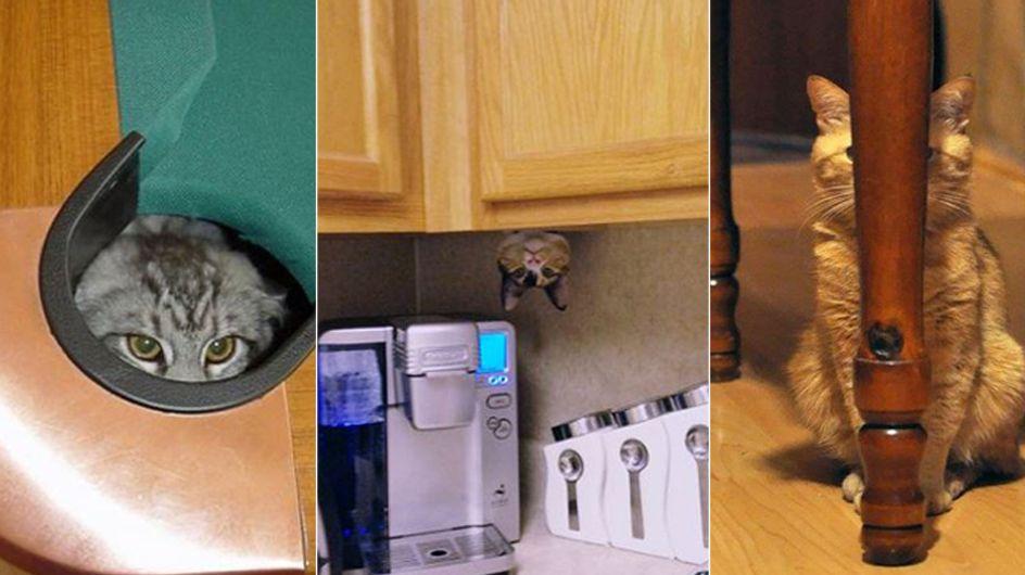 Wo bin ich? Diese 15 Ninja-Katzen sind wahre Meister des Versteckspiels
