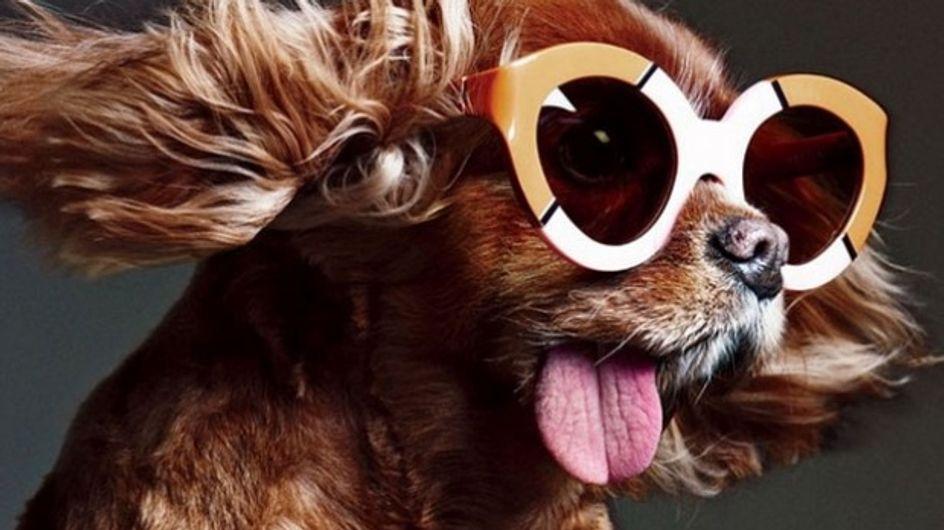 Le chien à lunettes beaucoup trop mignon de Karen Walker