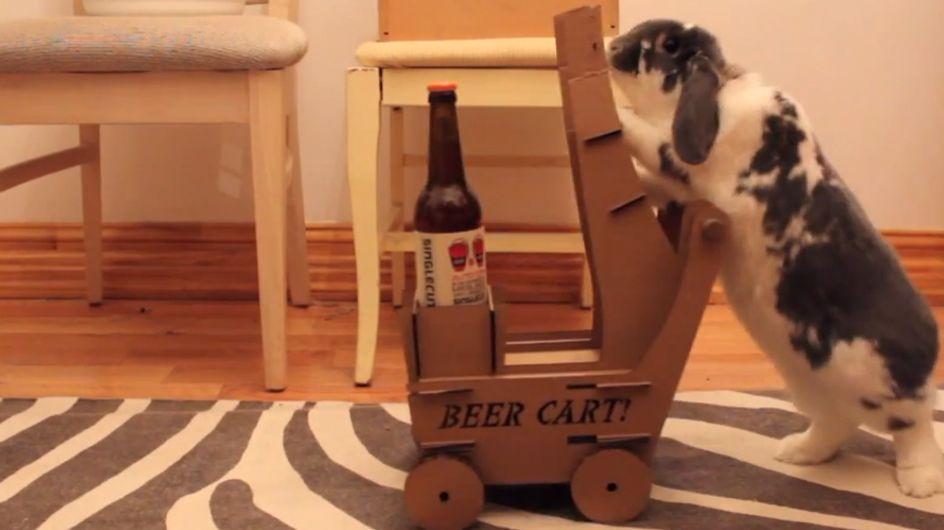 Video/ Un coniglio come maggiordomo? Ecco cosa ha fatto questo ragazzo per farsi portare le birre dal suo coniglietto!