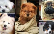 So goldig: Diese 15 Welpen-Fotos bringen unser Herz zum Schmelzen ?