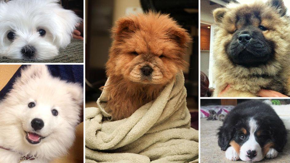So goldig: Diese 15 Welpen-Fotos bringen unser Herz zum Schmelzen ♥