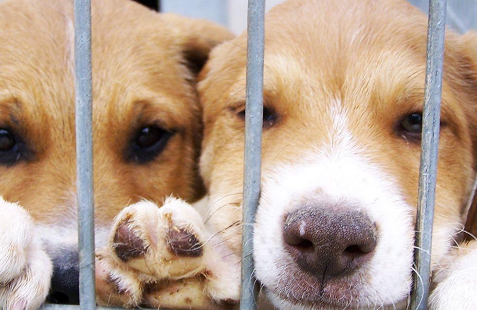 Antes y después: 25 imágenes de mascotas que cambiaron sus caras y sus vidas tras ser adoptadas