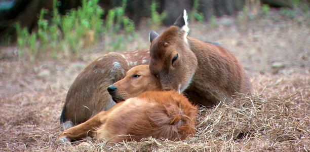 Animali che giocano insieme