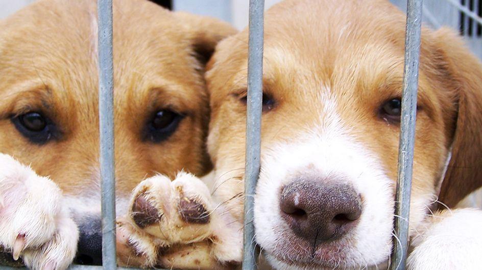 L'amore salva sempre: ecco come cambiano cani e gatti dopo l'adozione!