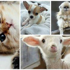 15 animaux beaucoup plus mignons que notre mec