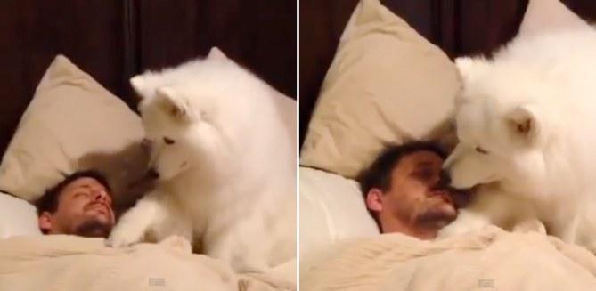 Il cagnone che prova a svegliare il padrone