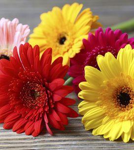 Cómo colocar flores en un jarrón: un truco sencillo pero muy práctico