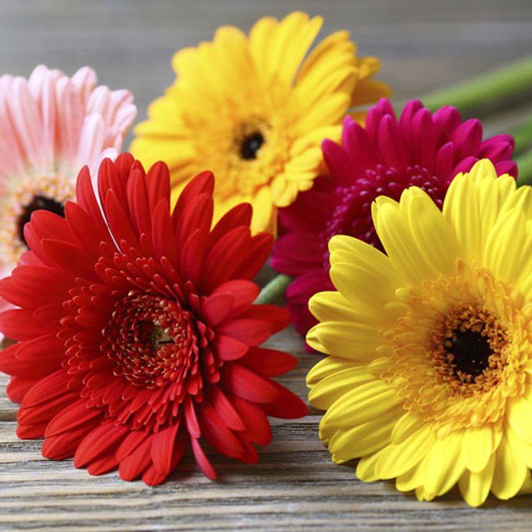 Truco Para Colocar Flores En Un Jarrón