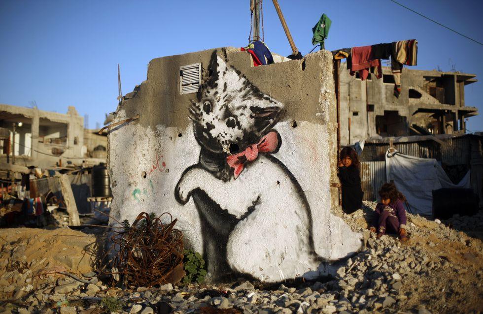 Un chaton sur les murs en ruines de Gaza