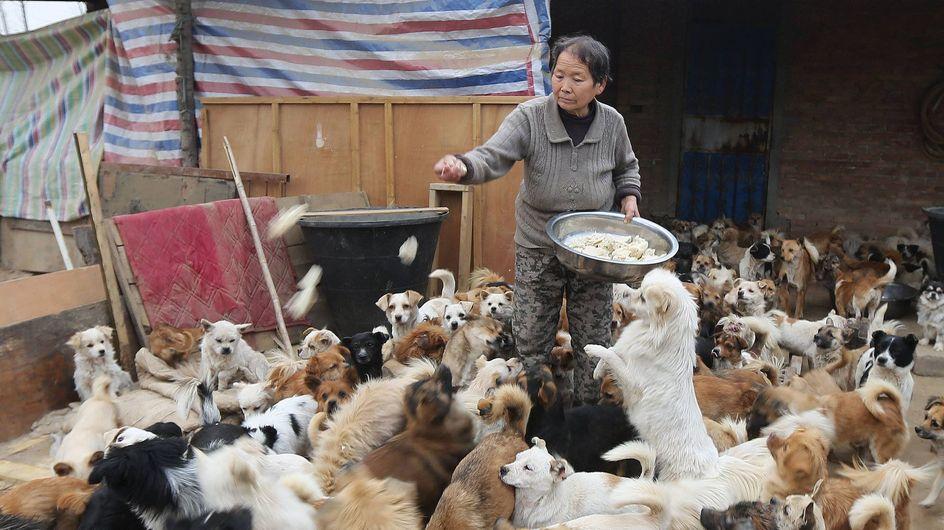 Wahre Tierliebe: Diese Frauen kümmern sich aufopferungsvoll um hunderte Straßenhunde