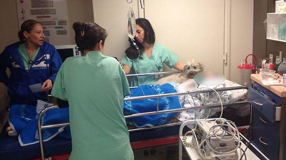 Das ist wahre Liebe: Treue Hündin bewacht das Krankenbett ihres Herrchens