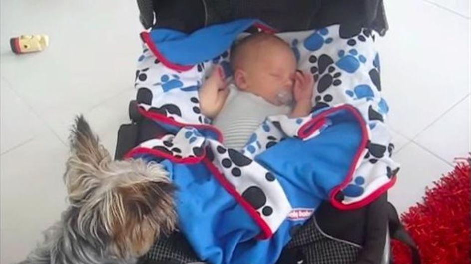 Dieser Hund reagiert ungewöhnlich auf das Baby: Was er dann tut, lässt unsere Herzen schmelzen