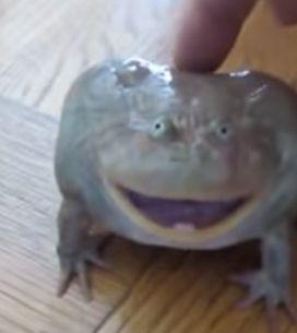 Was passiert, wenn man einen Frosch streichelt? Wir liegen immer noch unterm Tis