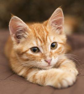 Les aliments préférés des chats