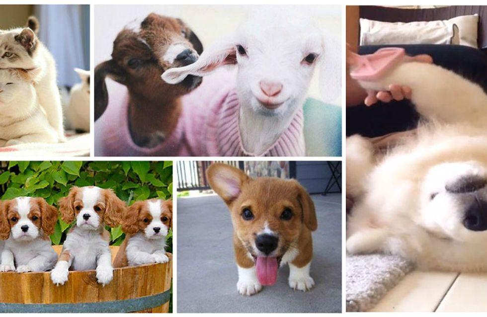 10 vidéos d'animaux super mignonnes repérées sur Instagram
