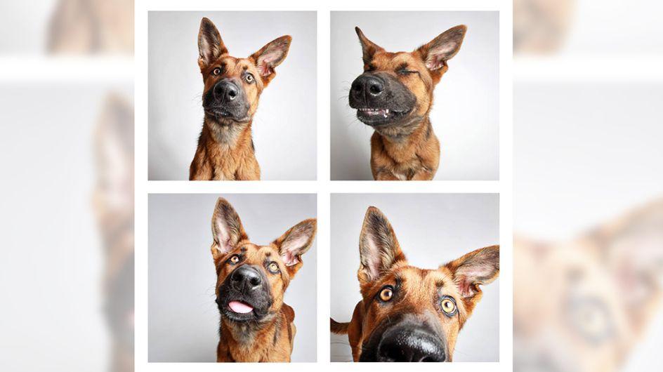 Diese süßen Fotos sollen Hunden im Tierheim zur Adoption verhelfen