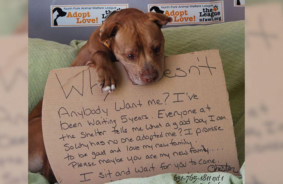 """""""Warum möchte mich keiner haben?"""" Dieses herzzerreißende Bild eines Tierheim-Hundes führte zu etwas Unglaublichem"""