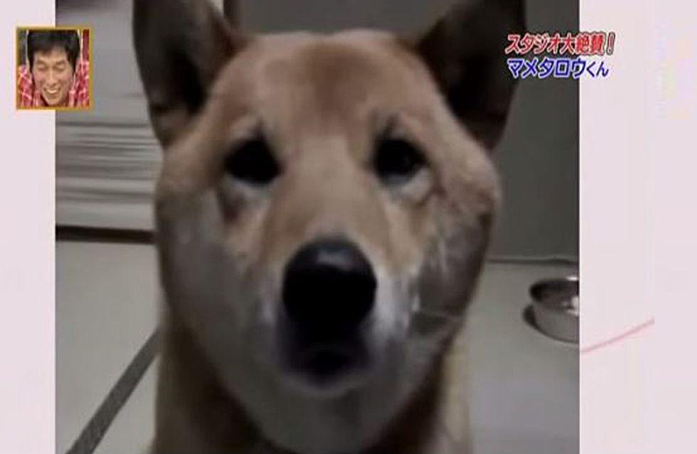 Sie bittet ihren Hund, ein wenig leiser zu bellen - was dann passiert, lässt unsere Herzen schmelzen