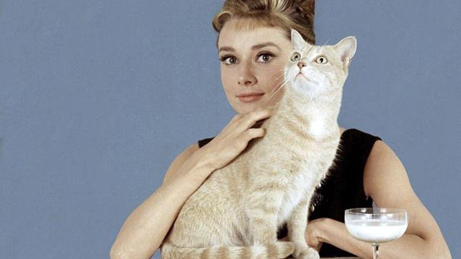 "10 trucs qui prouvent que tu es une ""cat lady"""
