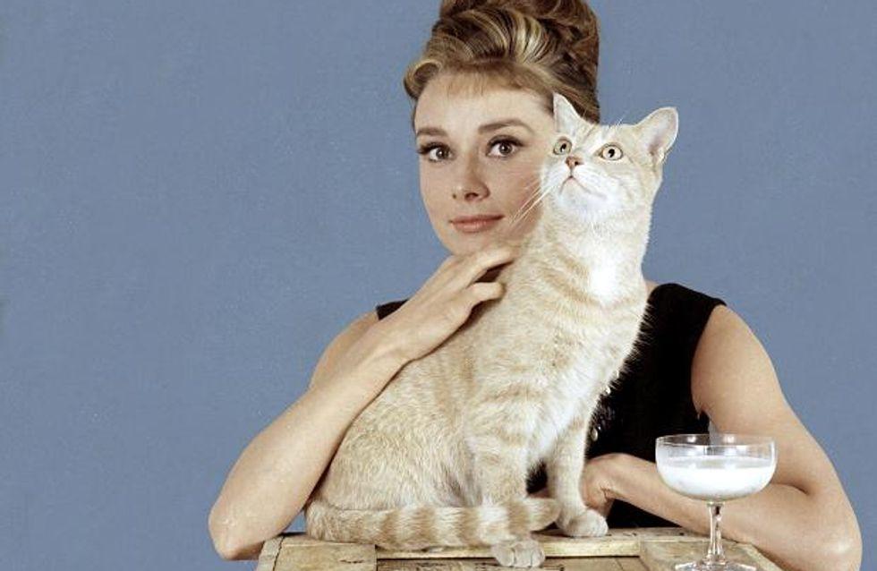 10 trucs qui prouvent que tu es une cat lady