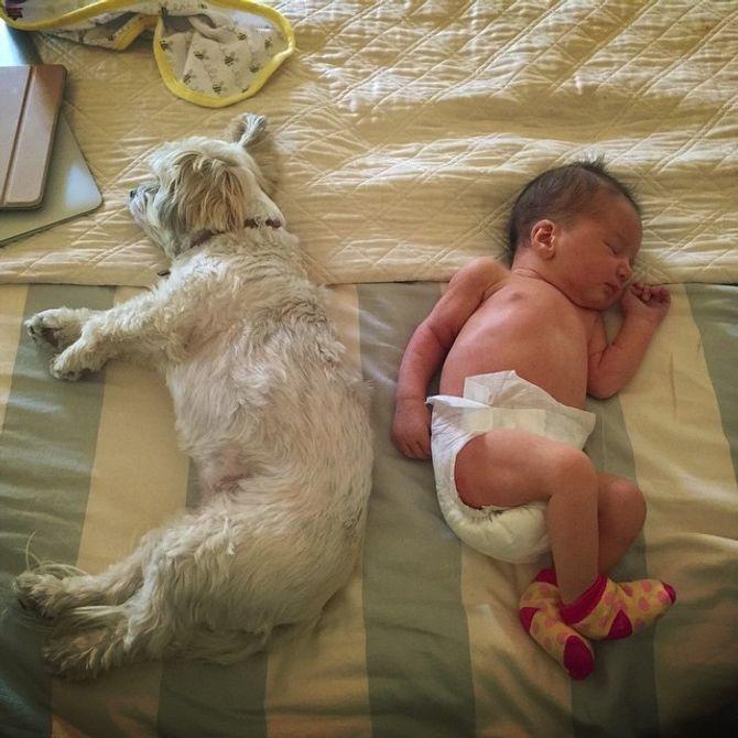 Dashiel et le chien Sweet Potato
