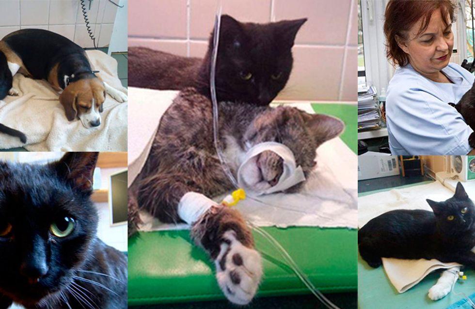 Gatos podem ser mais carinhosos do que você pensa! Conheça o gatinho enfermeiro