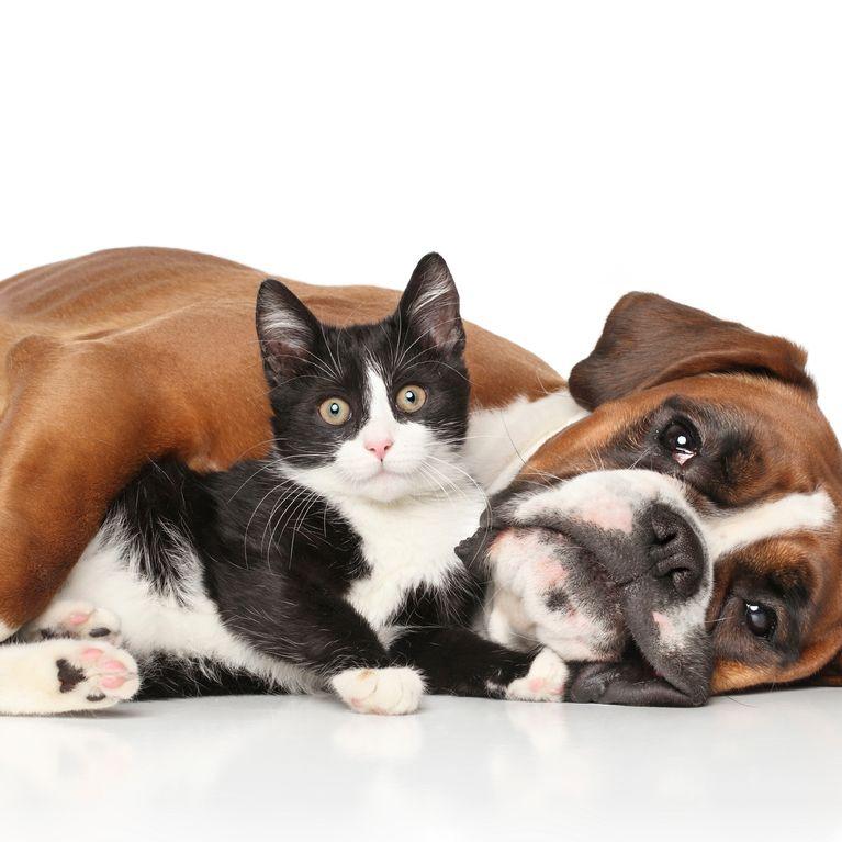 Come Ridurre Il Numero Di Peli Di Gatti E Cani In Casa
