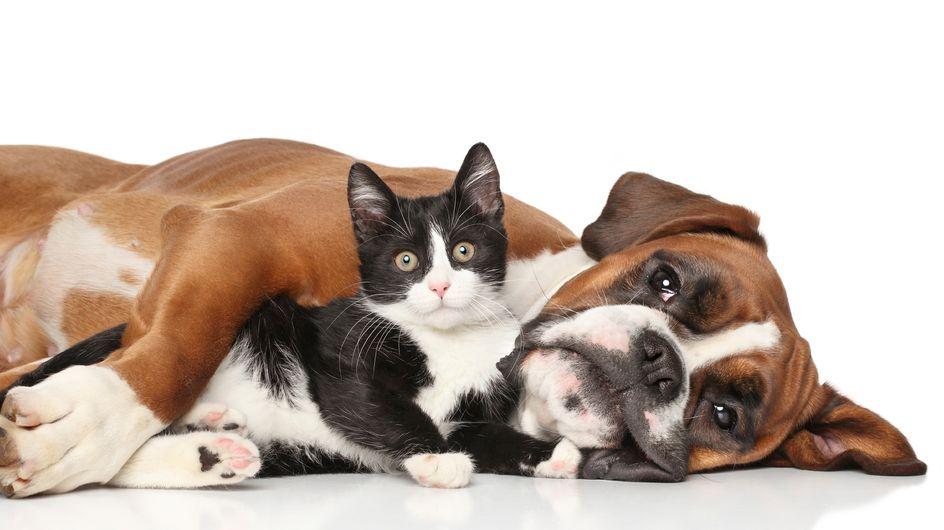 Peli di gatti e cani in casa ovunque? Consigli su come rimuoverli