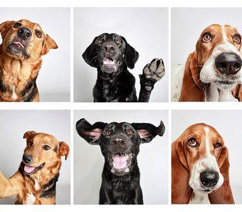 Cómo un fotomatón cambió para siempre la vida de estos perros abandonados