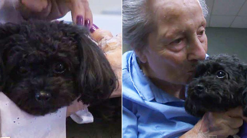 Dieser kleine Pudel kümmert sich liebevoll um die Bewohner eines Seniorenheims
