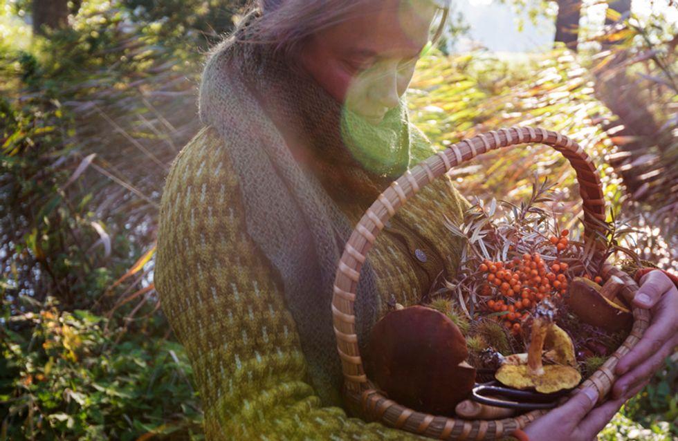 Los champiñones, reyes indiscutibles del otoño
