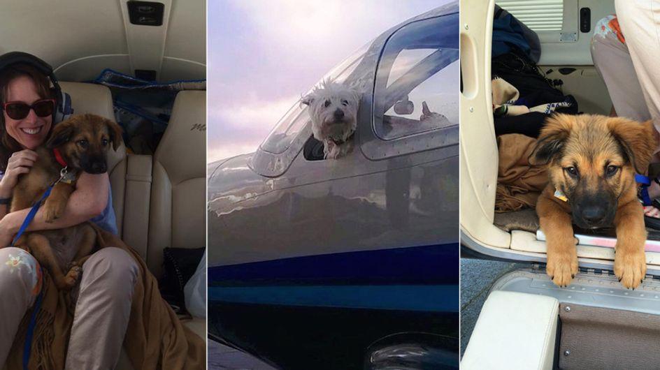 Piloten mit ♥: Sie retten Hunde vor dem Tod und bringen sie mit ihrem Flugzeug in Sicherheit