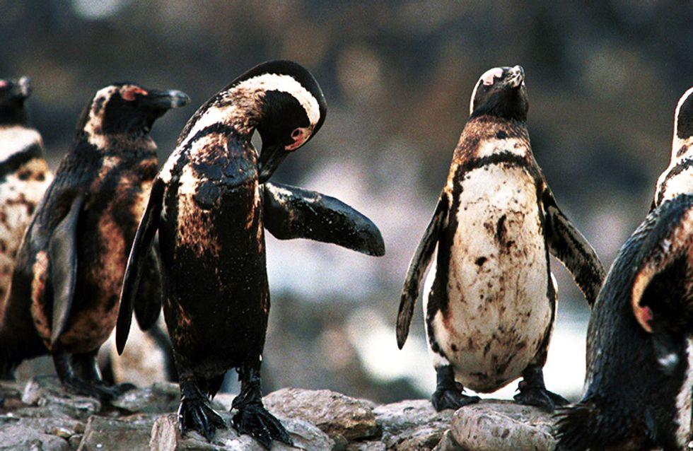 20 imágenes desgarradoras que muestran los efectos de la contaminación en el mundo animal