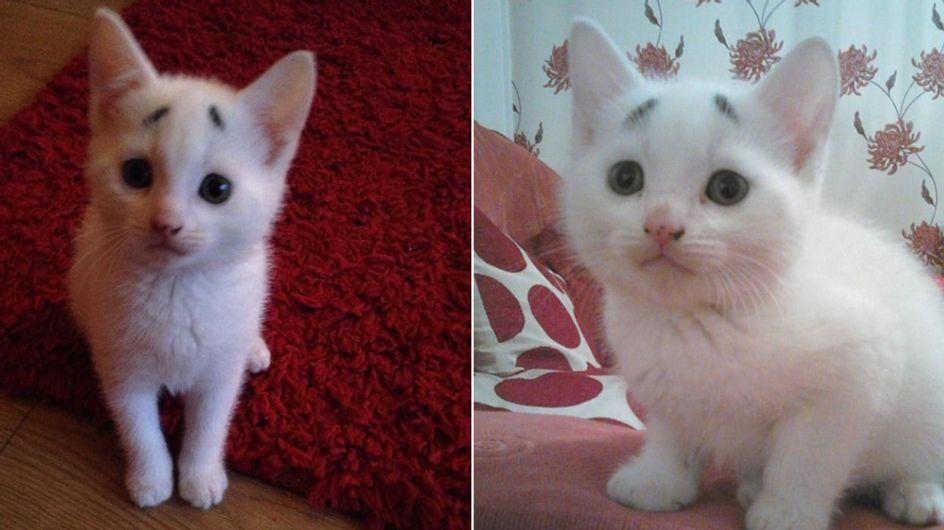 Diese besorgt dreinblickende Katze ist der neue Star am Internethimmel