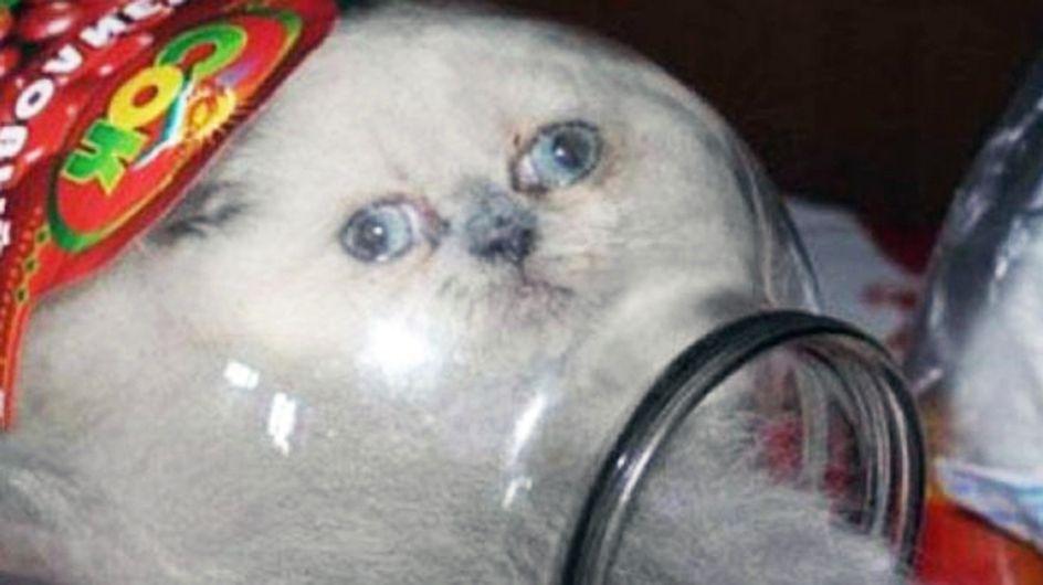 La curiosidad mató al gato: 30 mininos que se pasaron de listos y fallaron