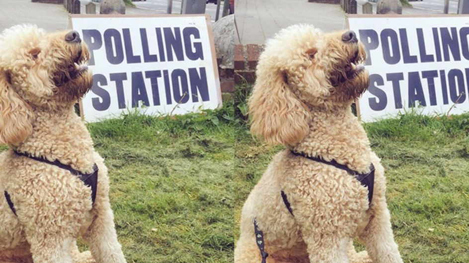 #DogsAtPollingStations Is Our Favourite Thing About The General Election So Far
