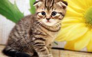 Comment bien s'occuper d'un chaton ?