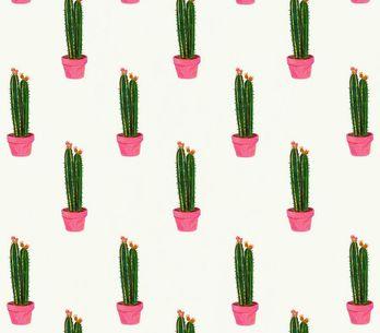 Passion Cactus, vous allez craquer !